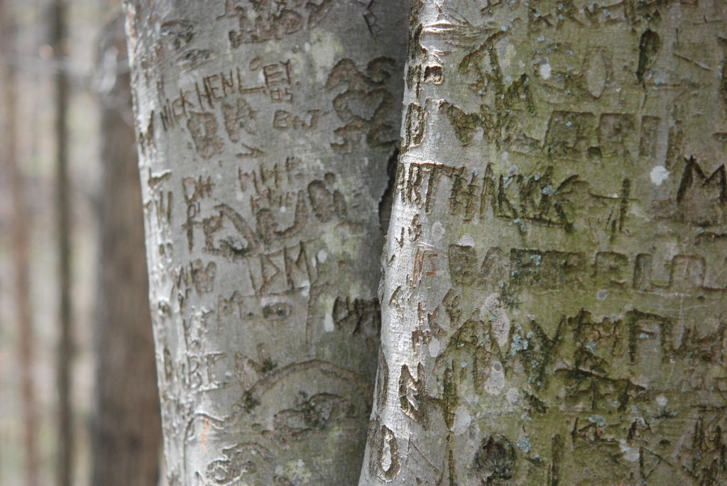 morelfestgraffititree